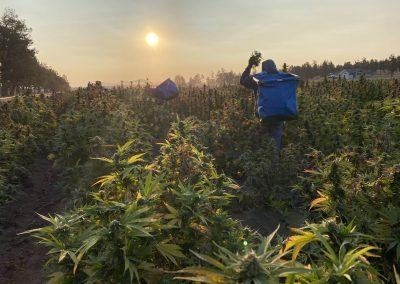 Hands-on Human Harvesting